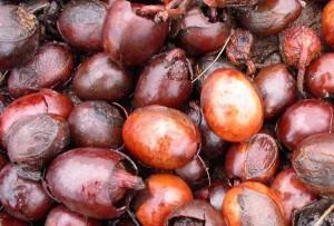 Harvested shea nuts